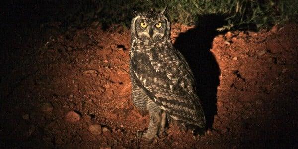Bird species Botswana