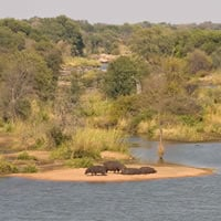 Hippos along the Limpopo river