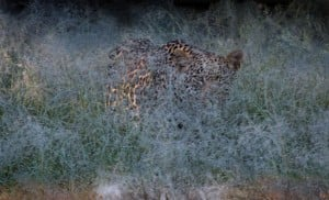 Predators in Part of Africa