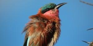 Birds in Botswana