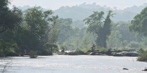 Botswana Nature Limpopo River