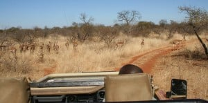Safari Botswana Game Drive