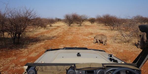 rhino baby gamedrive