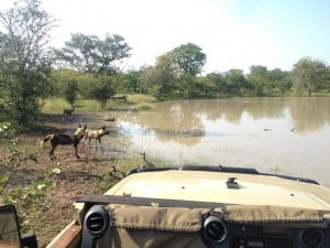 Game Drive Part of Africa Botswana