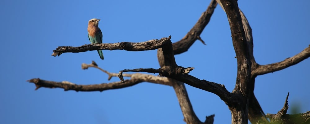 PartofAfrica birds